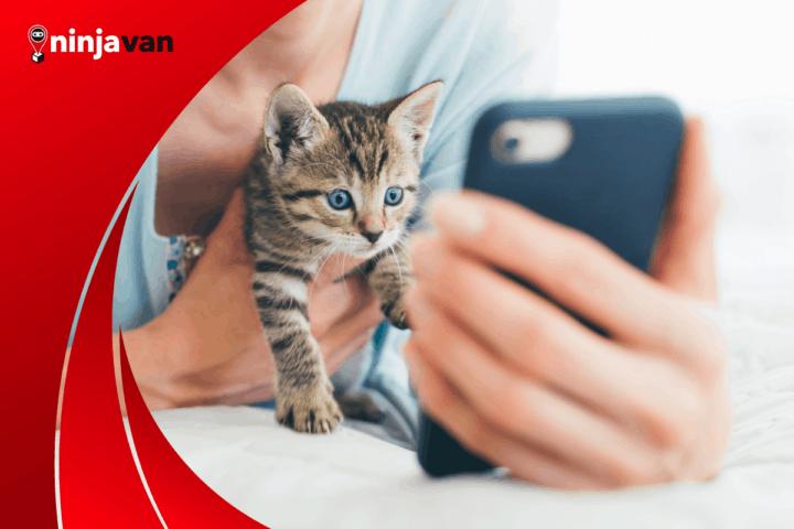 cat influencer